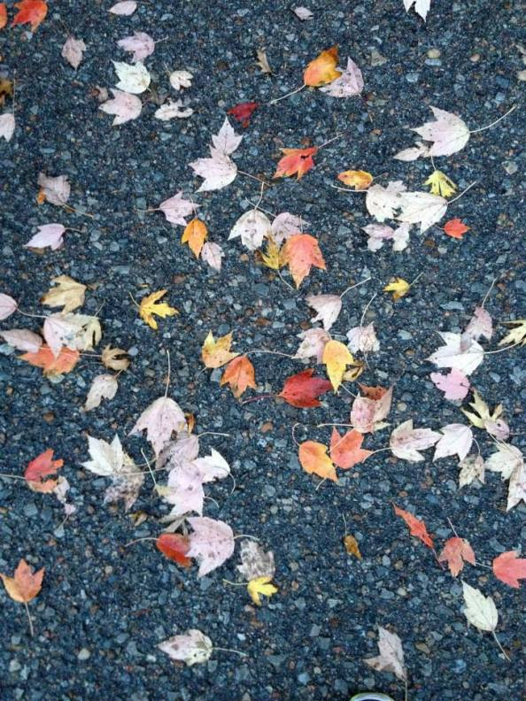 Fall Learning Themes for Preschoolers (Part1)