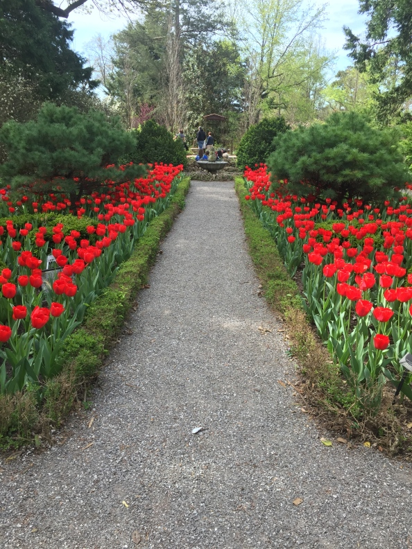 Weekly Brew: Tulips, Art and a RefreshedSoul
