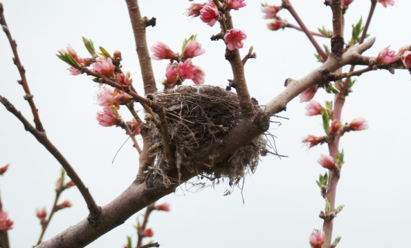 Nesting Mode Update